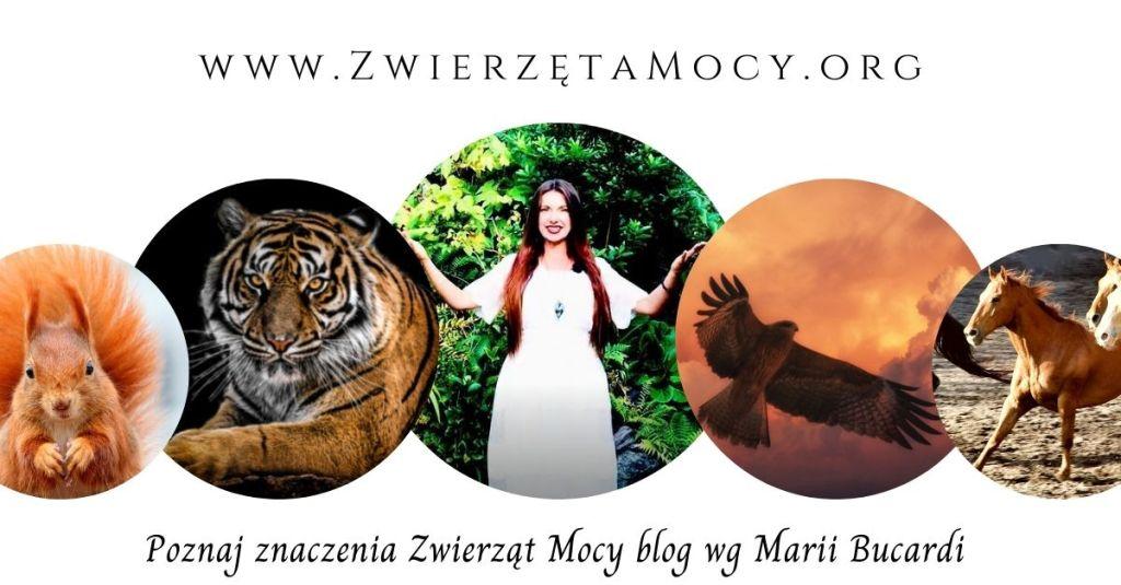 Zwierzęta Mocy znaczenie, rozwój osobisty i duchowy, Maria Bucardi